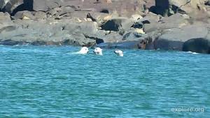 A Bounty of Belugas and Bears