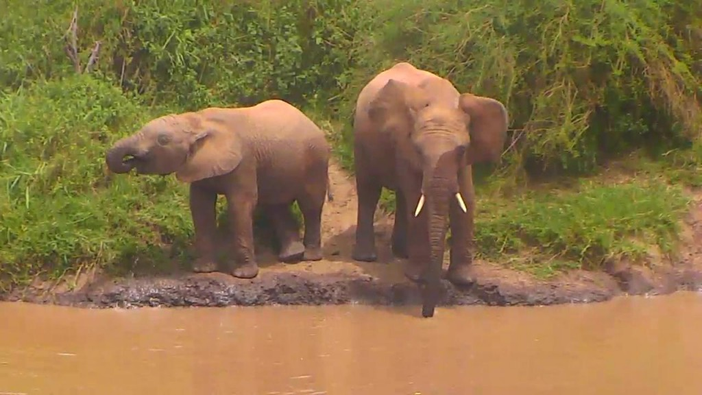 A couple of thirsty elephants grabbing a drink   Snapshot by  Gypsybug