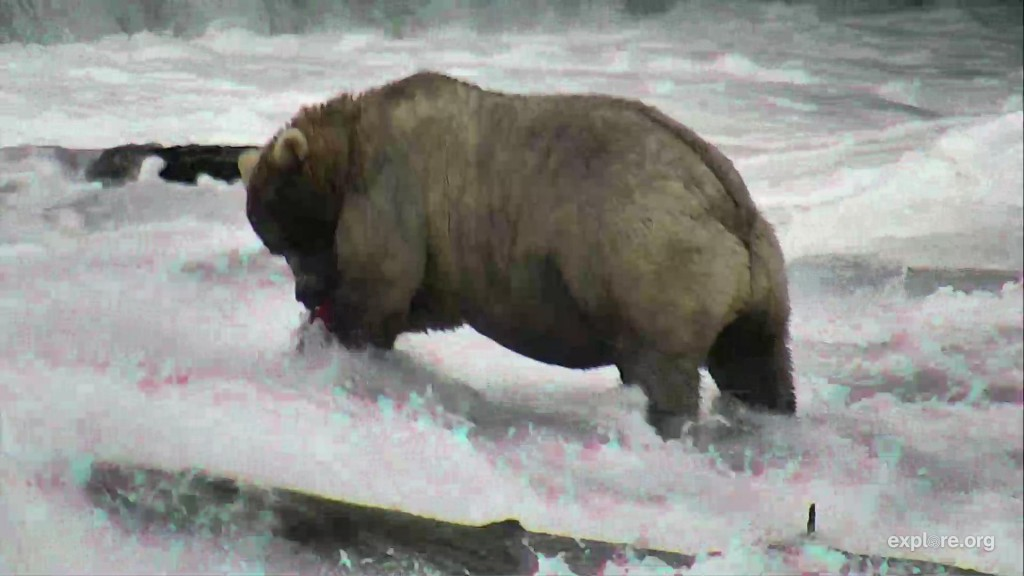 Holly chowing down on some salmon | Snapshot by Lenoirdenantes