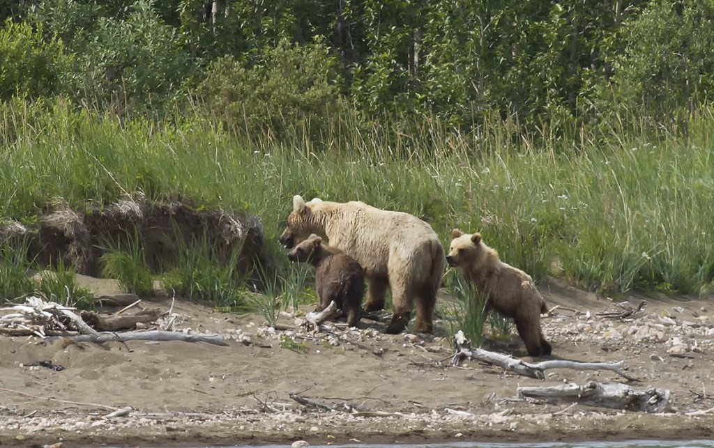 hollybear-cub-cubadult