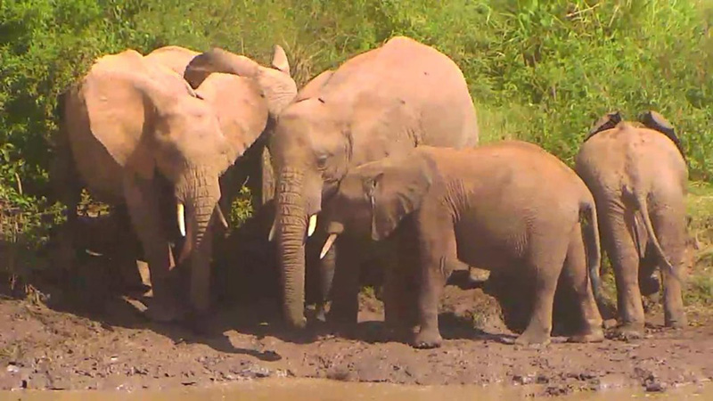 Happy World Elephant Day! | Snapshot by lindysue