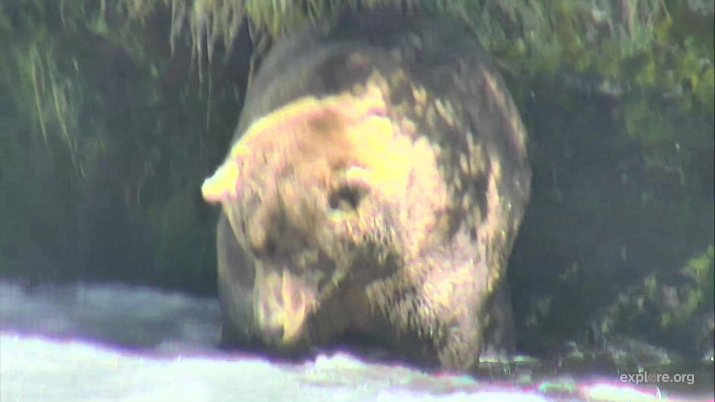 Otis, the mighty fisherbear | Snapshot by JanellJenkins