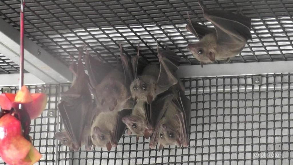 BatCluster_Doug