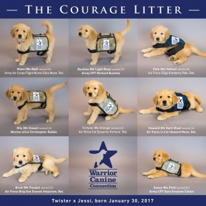 WCC's Courage Litter Puppies Officially Named