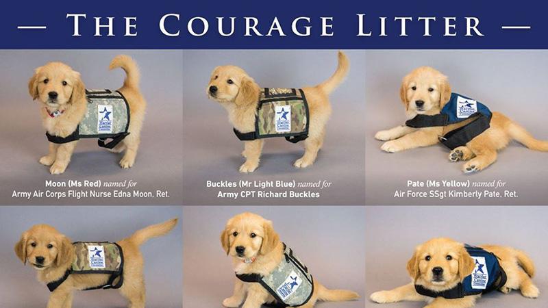 CourageLitterNames