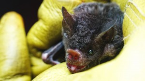 Live Chat On Bat Appreciation Day!
