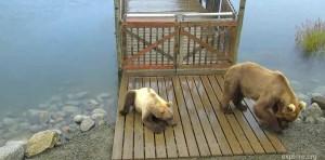 Bear Story: SLH
