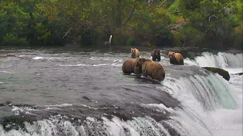 719 getting backed up almost off the falls by 128 Grazer while her cubs watch