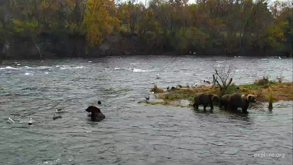 153 and cubs at the falls