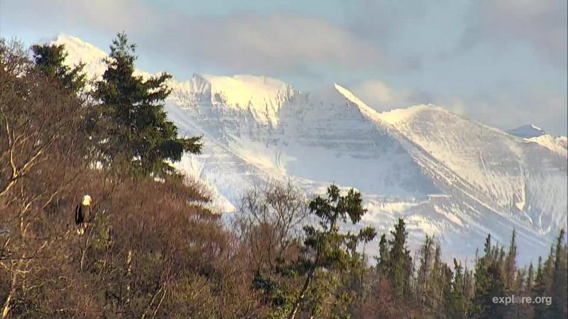 Bald Eagle with Mount Katolinat in background