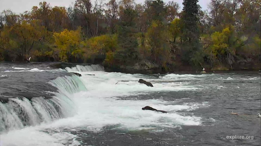 3 bears at the falls at the end of the week