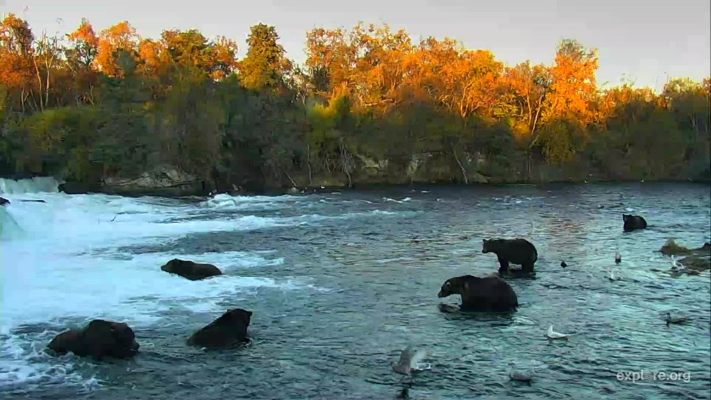 8 bears were at the falls at the beginning of the week