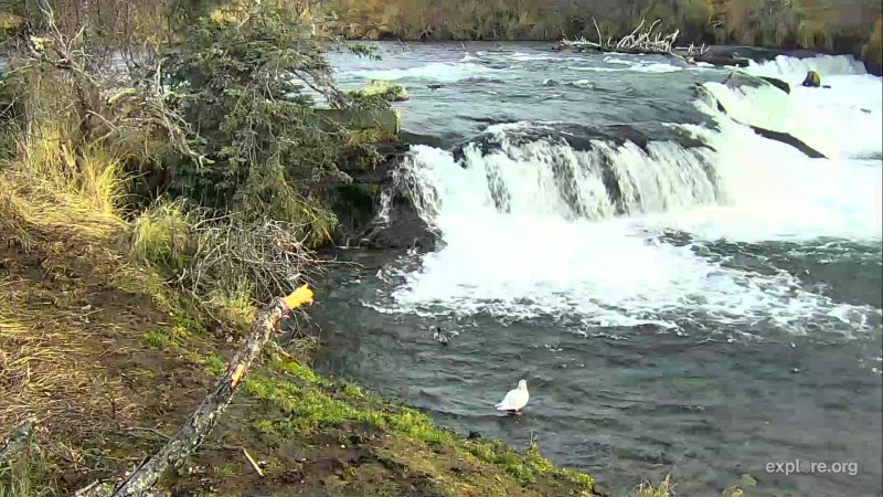 lone seagull at the falls