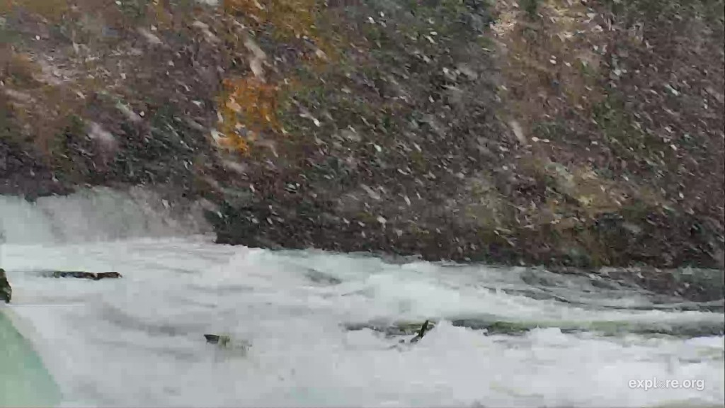 Snowing at Brooks Falls, bear 474 is barely visible in the office