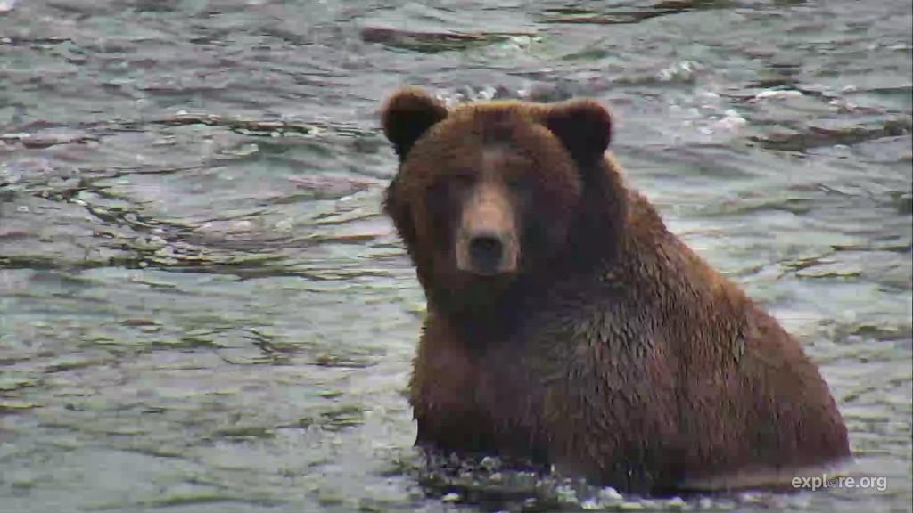 unidentified bear