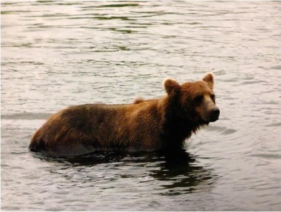 Bear 718