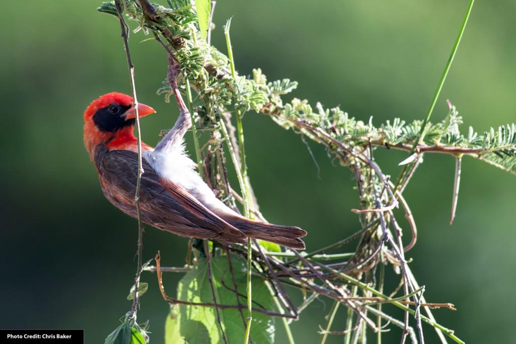 Bird Pictures Amazing Birds: Amazing Birds Of Mpala