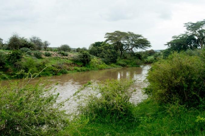Part of the Ewaso Ng'iro river at Mpala