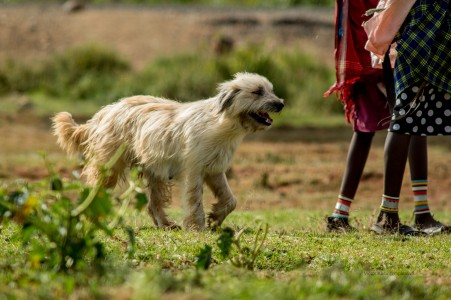 Rabies Free Laikipia Helps Conserve Our Wildlife