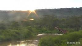Africa CamOp Ele