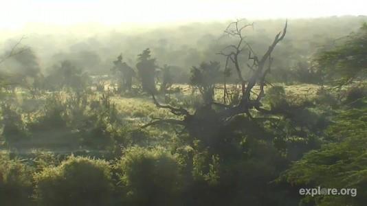 Africa CamOp Pan