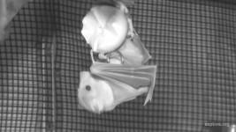 Bats CamOp Chip