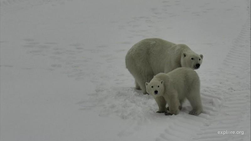 Bears_PBs_MomAndCub_COFawn_11.20.17