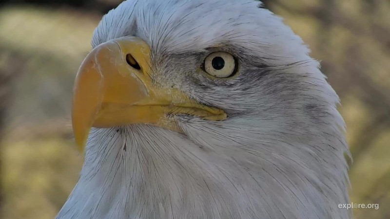 Birds_Eagles_DNN_Mom_COJohn_11.29.17