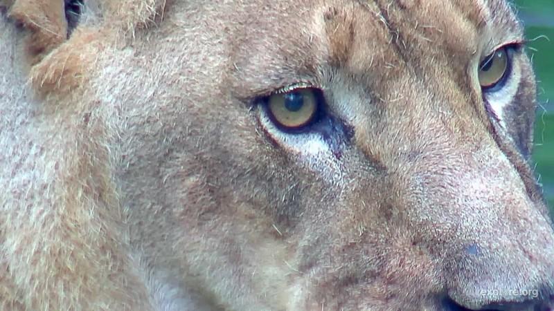 Cats_BCR_Nikita_Closeup_COArya_11.24.17