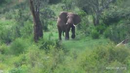 Elephant CamOp Aspir3e