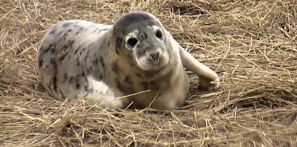 gray seal blog