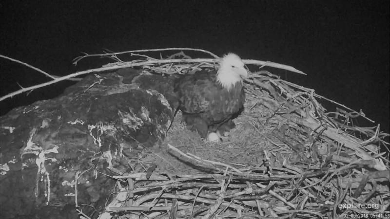 Birds_West End Eagles_First Egg_moms76vette_2.09.18