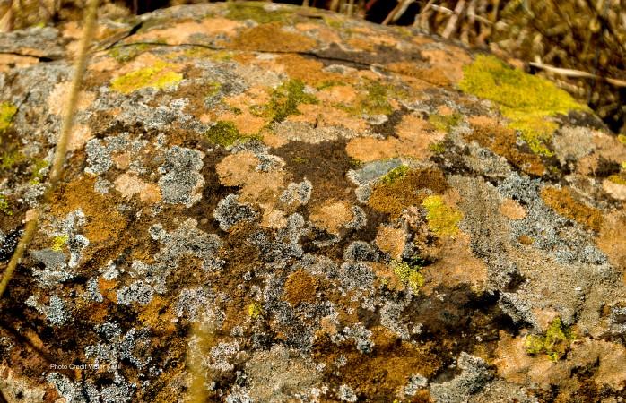 Colourful fungi on a rock