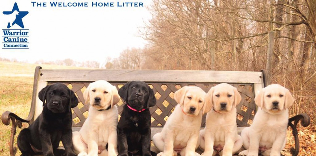 wcc welcome home litter blog