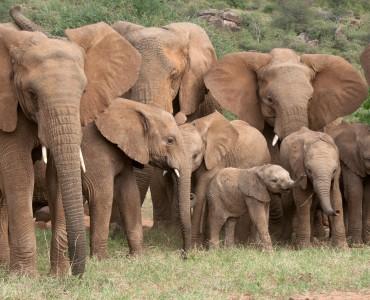 Virtual Panel on Elephant Research at Mpala