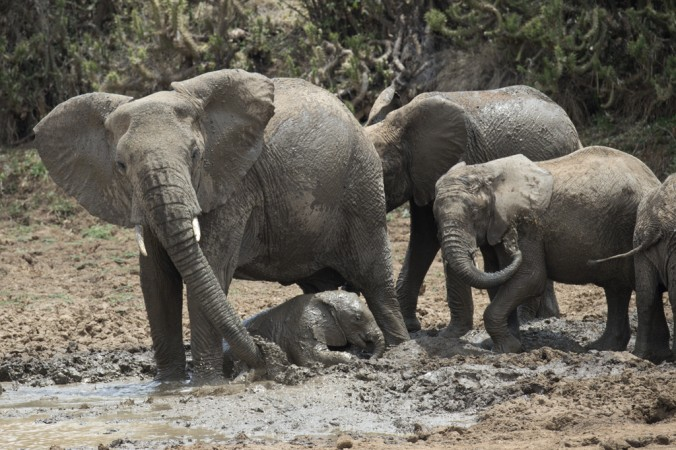 Mud bath - Photo Credit Julie Larsen Maher