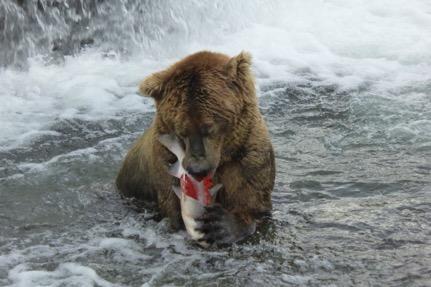 410 bear blog
