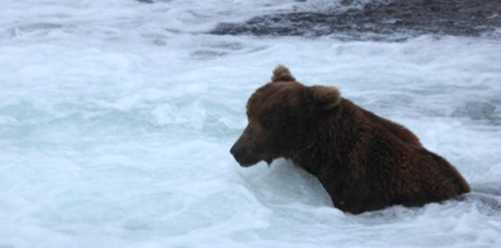 856 bear blog