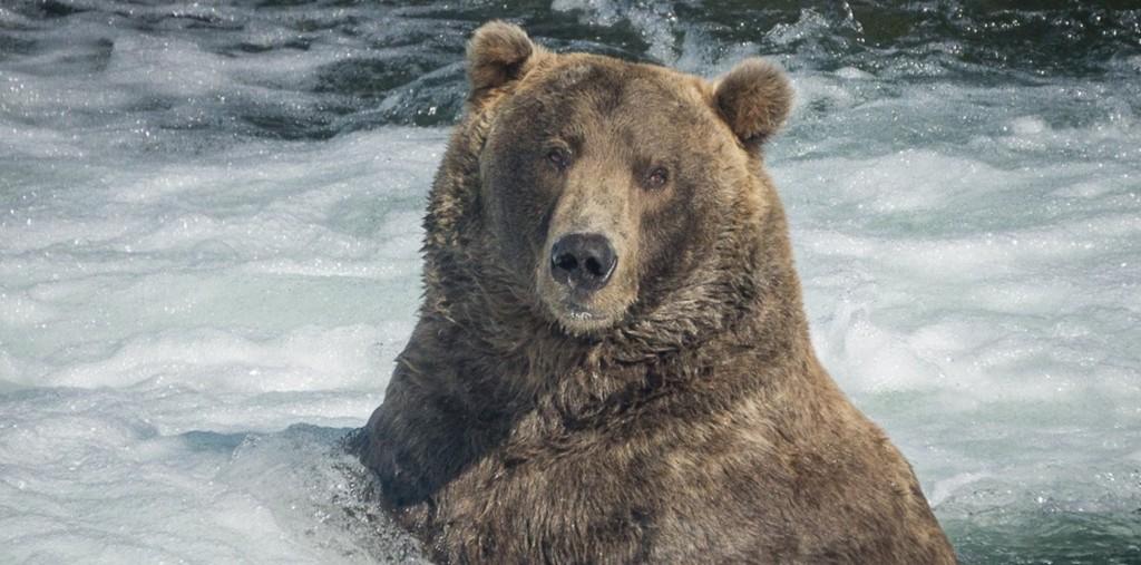 Otis bear blog