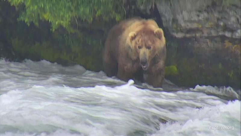 480 Otis returned to the falls on June 29