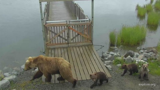 Bearcam Week in Review July 20