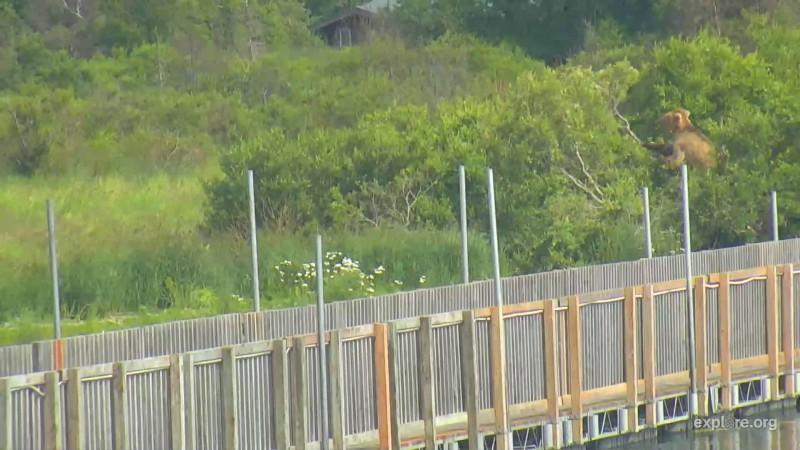 719 tree trimming near the bridge
