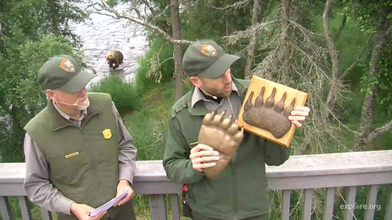 Ranger Andrew hold up impressions from a bears rear and front paw