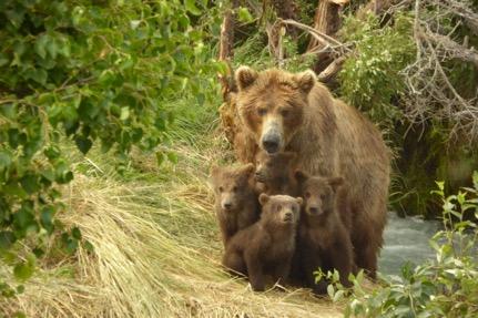402 cubs 2