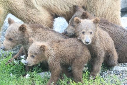 402 cubs 3