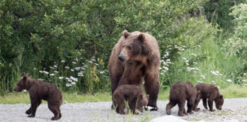 402 cubs blog