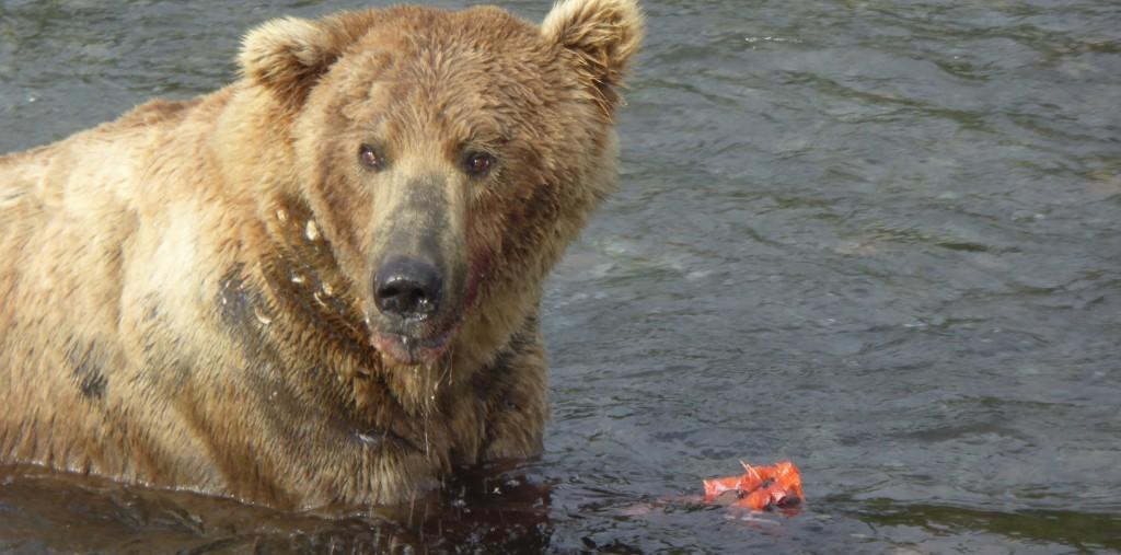 480 bear blog