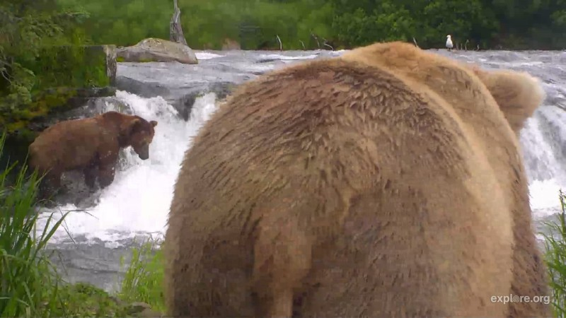 Bears_Bear Butt_Brenda05_7.5.18