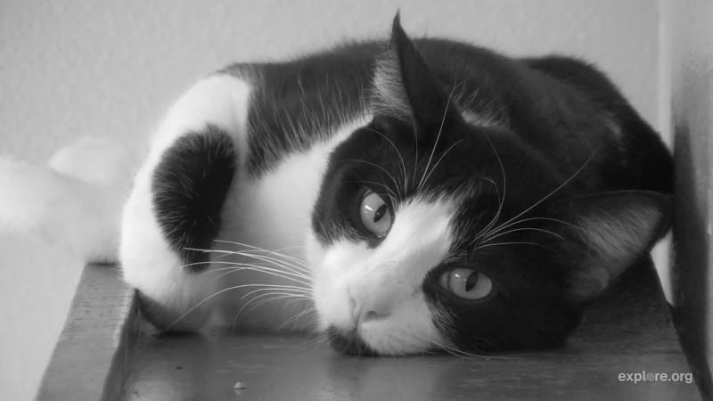 Cats_spcaLA_CamOp Kris_7.19.18