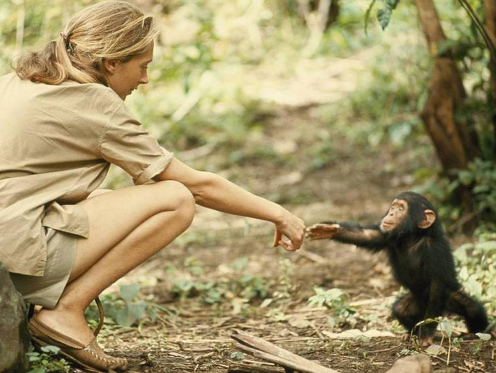 Jane Goodall with a baby chimp. Photo courtesy of janegoodall.org